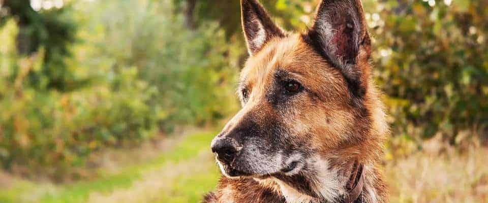huisdieren niche is 1 van de beste affiliates niches
